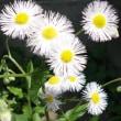 花々が満開  4月下旬の花
