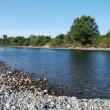 今日の荒川です。