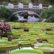 9月でも素敵だった「草津市立水生植物公園みずの森」♪