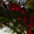 鳥さんと秋の森のステンドグラス♪