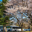 22/Apr 軽井沢の桜とミソサザイとカワセミ