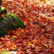 金沢市内紅葉 珠姫の菩提寺「天徳院」