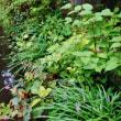夏の庭園(板橋区薬師の泉庭園)