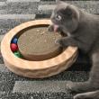 破壊神猫丸