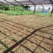 2017年9月10日 大根畑の下準備をしました。耕耘機がまた故障です。