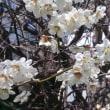 いきなり春w