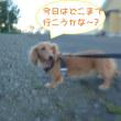 2018 9/17★今日はたろう君・ランちゃん・サクラちゃんです★