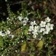 タンポポ・土筆・春の花
