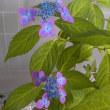 017  057   庭の花といけばな