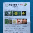 野菜クイズ ( 2月 )