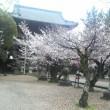 桜の季節・・桜情報