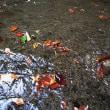 「耶馬のファースト秋の風景」