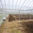 苗床①刈り揃え