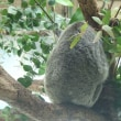 残暑厳しき多摩動物公園