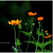 魅惑のオレンジ part2