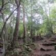 能勢自然の森で森林浴