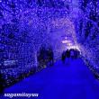 湘南の宝石「江ノ島イルミネーション」光と色の祭典に浸る!!