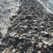 初氷確認 耕運作業とプチ山芋掘り