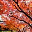 瑞巌寺の紅葉