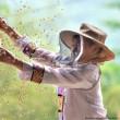 ドイツ(Germany): World Bee Day