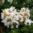 足元に花(8)