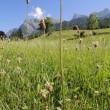 スイス旅行2日目   マイエンフェルト ハイジの故郷風景 №6