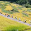 9月の信州上田・・・稲倉の棚田は・・・黄金の階段