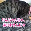 まな板、猫にカジカジされる!