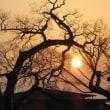 山氏神社に朝日が昇る