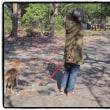 エリーとカモと公園と〜〜〜20171202