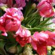 凍える中  春の花が💧