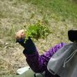 蕗の収穫と食材探し