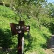 ミズ (ウワバミソウ)〜 六方の滝(柱状節理)