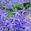 花彩々 紫の小花の群れ
