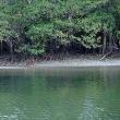 西表島15  浦内川