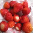 露地イチゴの季節なんですねぇ…*^0^*