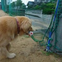 小学校にてボールのレトリーブしていると・・・・・・!