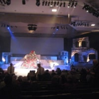 Living Christmas Trees at Grace