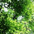 新緑の清々しさ‥④ 【ひで某】