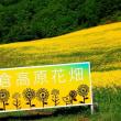 三ノ倉高原菜の花畑 福島県喜多方市