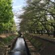 都立善福寺川緑地公園