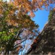 湯河原 幕岩 紅葉クライミング