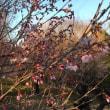 花木シーズン終了!