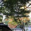 駒場あたりを秋散歩 ・・・ walking around Komaba