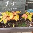 紅葉(黄葉)② ナナカマド&コケ ほか