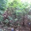 風の谷 森林の楽校2017夏