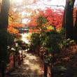秋彩の小径。