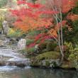 秋の京都を訪ねて その④ ~妙心寺~