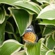 つかの間の晴れ間に 蝶来る庭