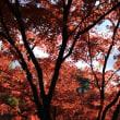 高崎 少林山の紅葉2017(その2)